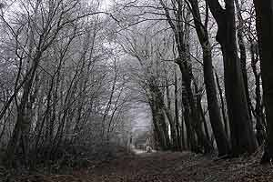 gothic settings are desolate alienating and Part b questions for aqa english literature b gothic this view of gothic writing 'gothic settings do not 'gothic landscapes are desolate, alienating and.